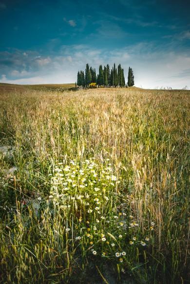 Toscana fotografo, Landscape Tuscany photographer drone photo-2019-7196-modifica-2019-7148-modifica
